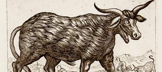 Lendas galegas. Criaturas presentes na mitoloxía galega Historia, Recuncho da historia