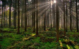 O Bosque animado. A Galicia máxica Historia, Qué facer, Qué ver, Recuncho da historia, Suxestións